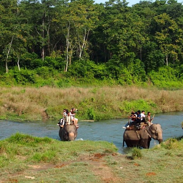 Safari in Nepal