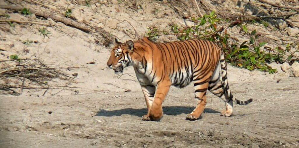 bardia-national-park3(1)