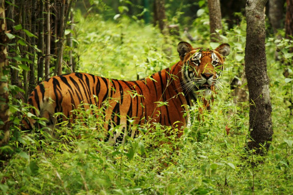 Chitwan 1 night 2 days