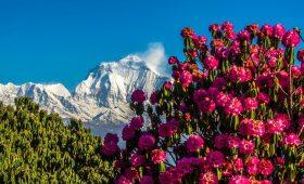 Trekking in Nepal in March 8